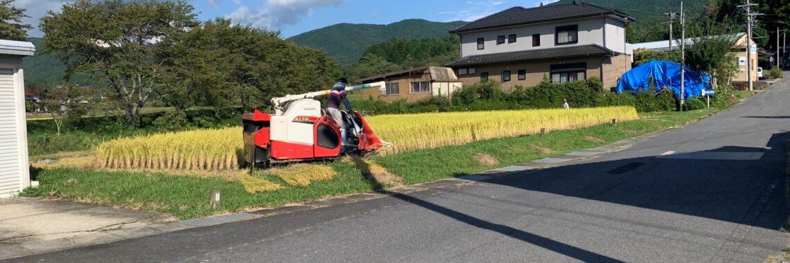 中野方の稲刈り